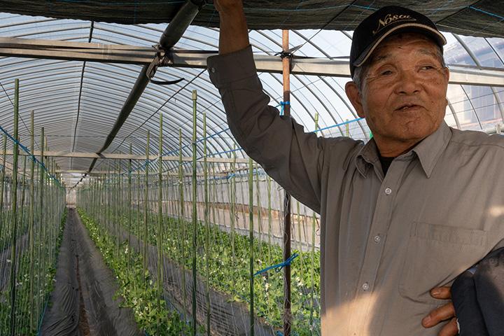 いちご農家柴崎留美さん メロンの生産を辞めいちごの生産へ